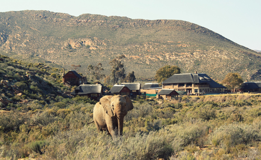Top Luxurious Winter Activities In Cape Town